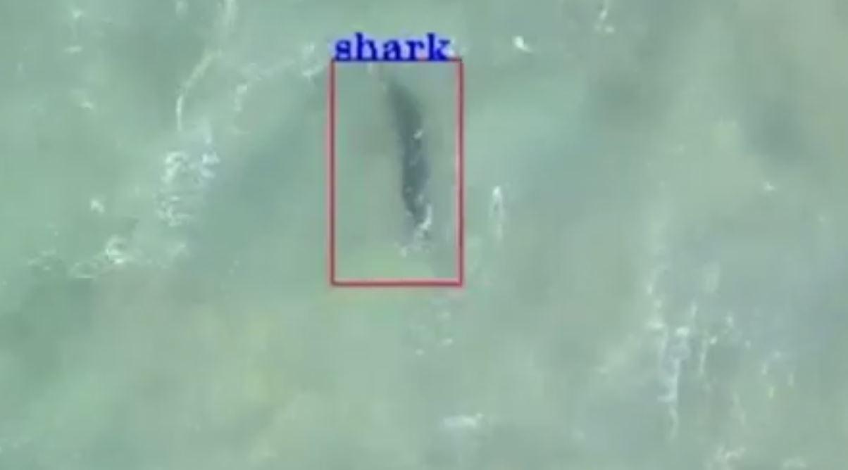 sharkdrone
